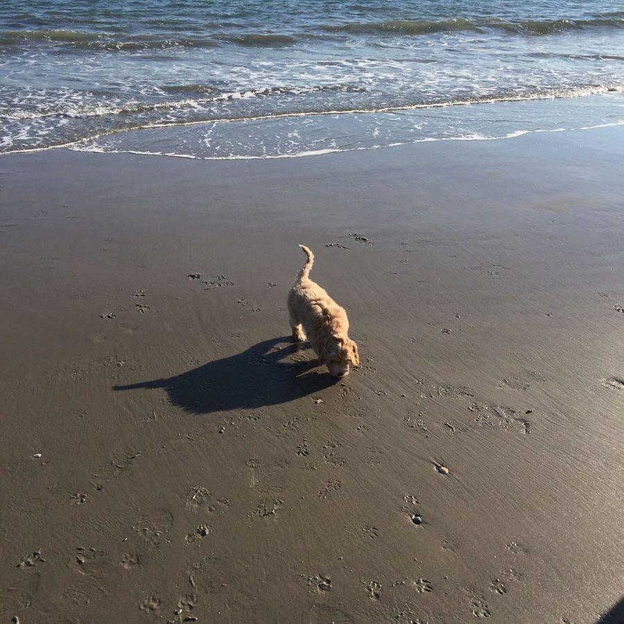 Testimonial-Jax-Beach16